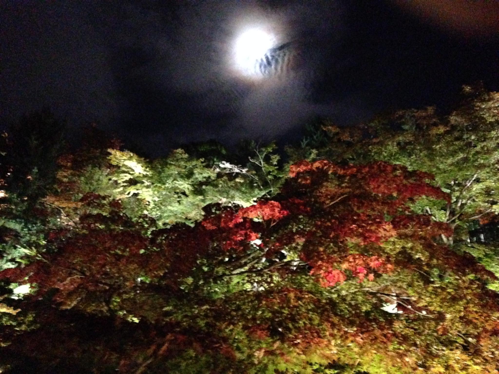 高台寺のライトアップin2015!!臥龍地が鏡かと思った