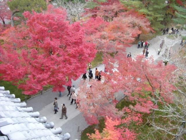 祇王寺の散紅葉の見頃は?おすすめのアクセス方法やコースは?
