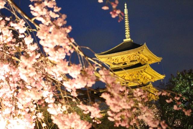 東寺の桜in2016のライトアップは?見頃と期間は要チェック!