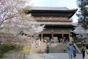 京都御苑の桜in2016の見頃は?3月下旬から1か月も楽しめるッ!!