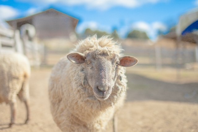 羊をめぐる冒険のあらすじ!物語論で解説するための準備①