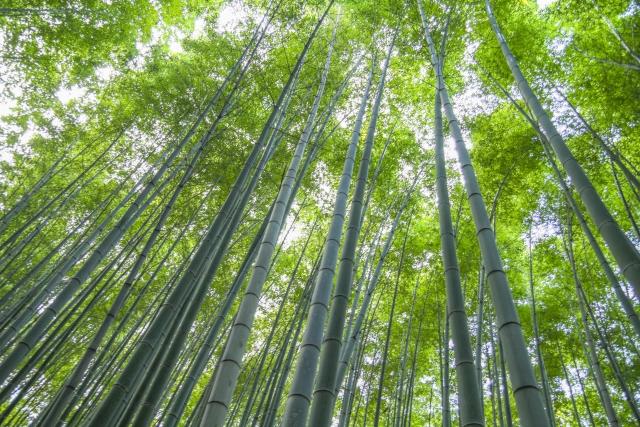 竹林へのアクセス‼京都駅からは電車がオススメ!バスと車をオススメしない理由は?