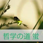 京都の蛍は哲学の道で!!2017年の時期と時間帯オススメは?