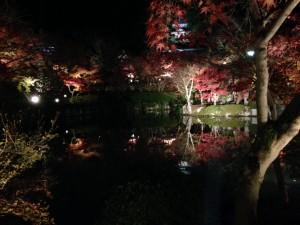 永観堂の紅葉2016の見ごろは?去年は11月18日からで今年は?