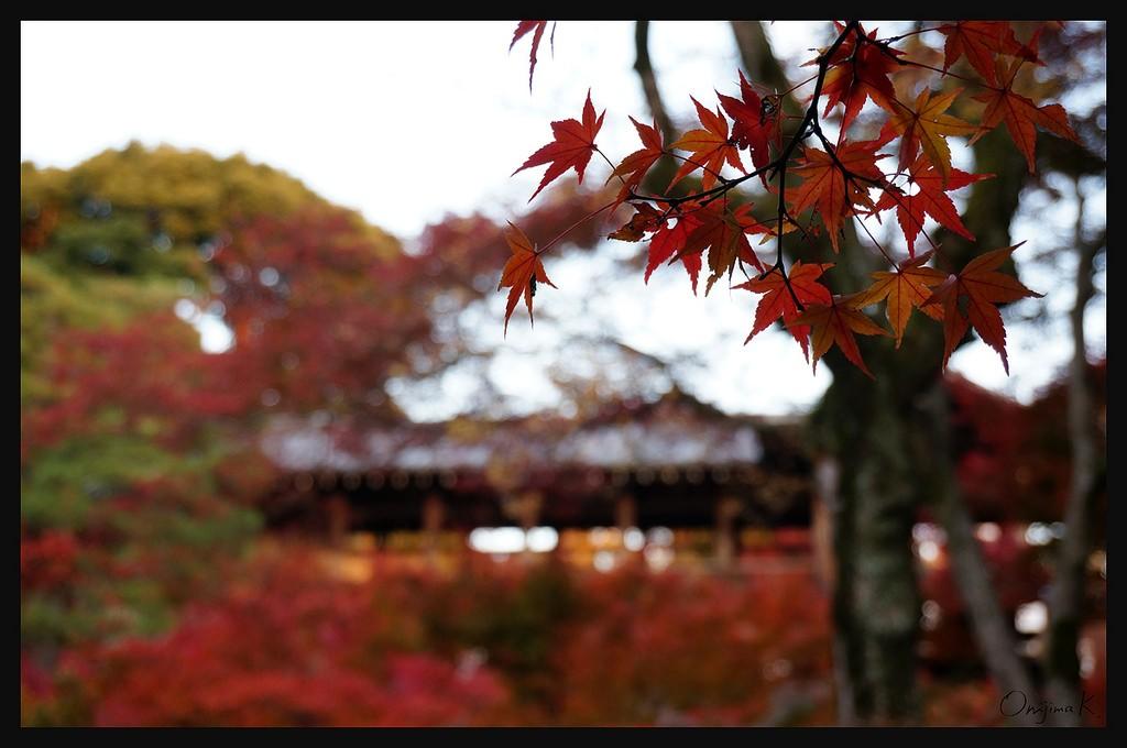 photo by Keiko Shih