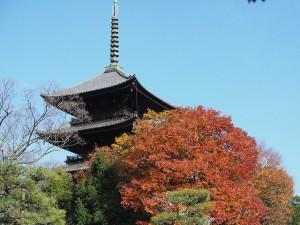 高台寺のライトアップin2016!!時間を確認して紅葉を楽しもう!!