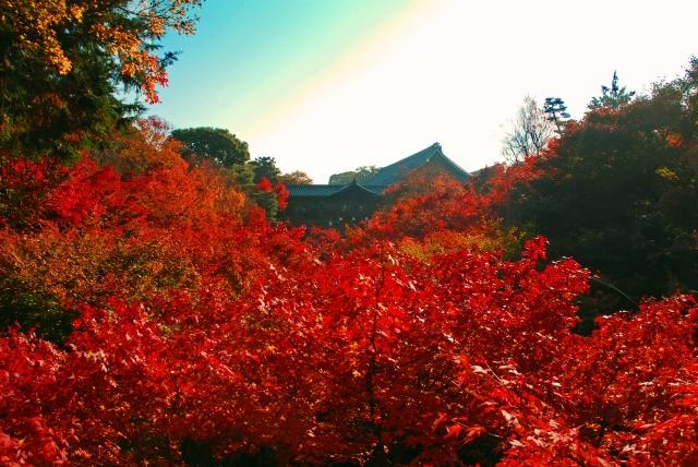 嵐山の紅葉の見ごろはいつ?2017年のピーク予想とおすすめコース